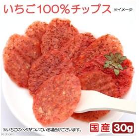 国産 いちご100%チップス 30g 小動物のおやつ 無添加 無着色 関東当日便