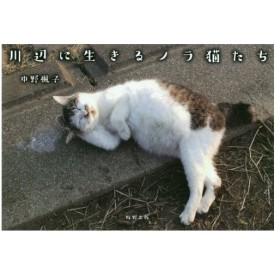 川辺に生きるノラ猫たち/中野楓子/著