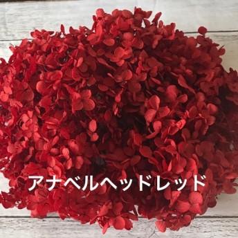 大地農園アナベルヘッドハーバリウム花材プリザーブドフラワーアジサイ小分け紫陽花