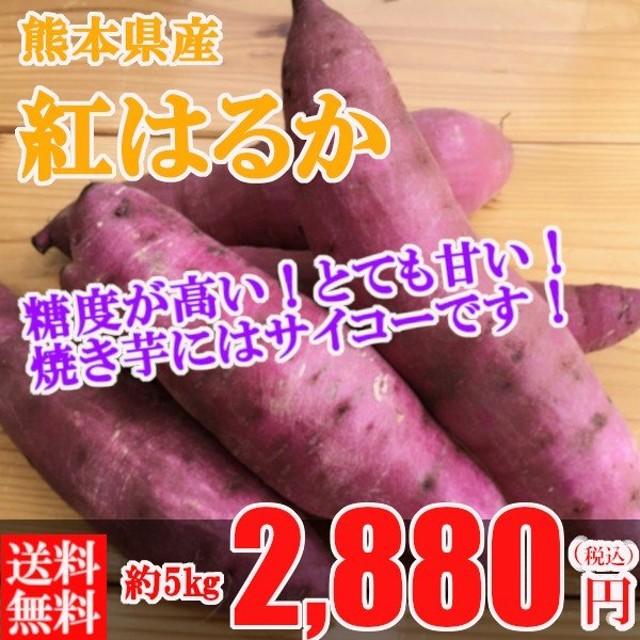 紅はるか さつまいも 5kg 熊本県産 送料無料