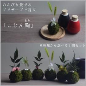 選べる2個セット プリザーブド苔玉「こじん鞠(まり)」