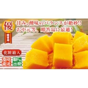 【2019年夏発送】国頭村産 燦々マンゴー【優品】