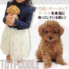 ぬいぐるみ 犬 トイプードル 動物 いぬ 子供 キッズ こども 女の子 誕生日 ギフト25cm