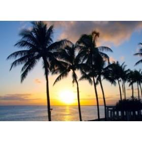 絵画風 壁紙ポスター ワイキキビーチの日の出 ハワイ の朝陽 ヤシの木 キャラクロ HWI-004A2 (A2版 594mm×420mm)