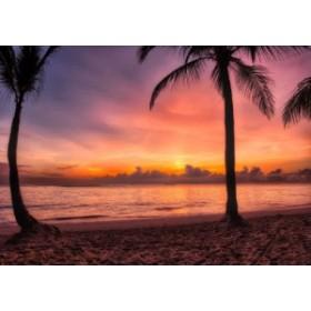 絵画風 壁紙ポスター 日の出のビーチ ドミニカの朝陽 ヤシの木 海 キャラクロ BCH-023A2 (A2版 594mm×420mm)