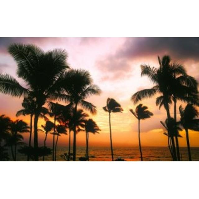 絵画風 壁紙ポスター ハワイ マウイ島のサンセットとパームツリー 夕焼け ヤシの木 キャラクロ HWI-038W1 (ワイド版 921mm×576mm)