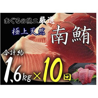 『鮪の魚二』約1.6kg天然南鮪定期便(10回コース)