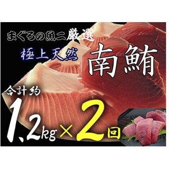 『鮪の魚二』約1.2kg天然南鮪定期便(2回コース)