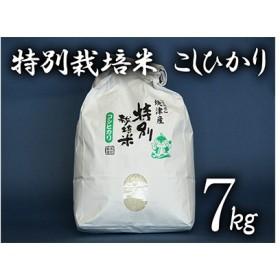 特別栽培米 こしひかり