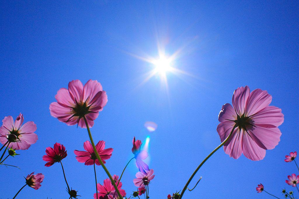 花を下から撮影