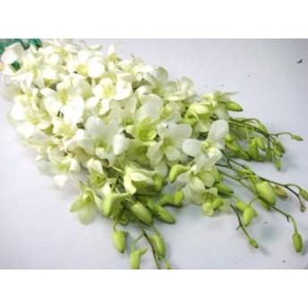 デンファレ白ビッグホワイトなど5本 切花 生け花 花材