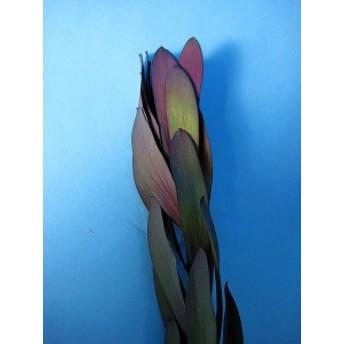 ワイルドフラワー (サファリサンセットなど)5本 切花 生け花 花材