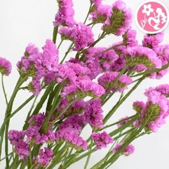 スターチス (フラッシュピンクなど)5本 切花 生け花 ハーバリウム花材ドライフラワーに最適