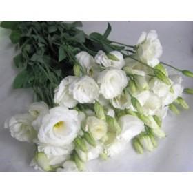 トルコヤエホワイト(ニューリネーションWなど5本 切花 生け花 花材