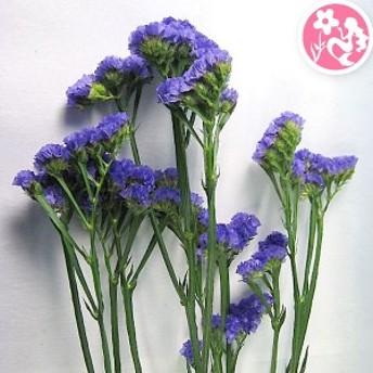スターチス (サンデーバイオレットなど)5本 生花からドライフラワー ハーバリウム花材 切花 生け花 花材