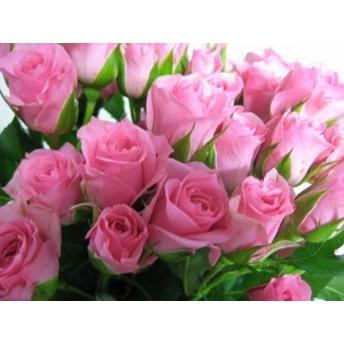 SPミニバラ ピンク (M-ミスティークピンク など)5本 切花 生け花 ハーバリウム花材ドライフラワーに最適