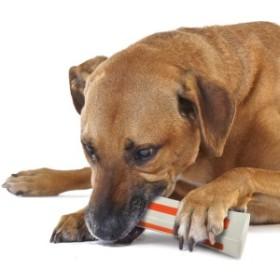噛みたい欲求の強いワンちゃんに  Petstages ペットステージ ビヨンド・ボーン ジャイアント 【犬/おもちゃ/骨/丈夫/噛む】
