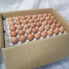 小谷養鶏場のたまご 120個