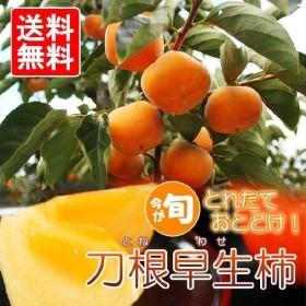 奈良県産刀根早生柿 約2.5kg (12〜14玉) 家庭用【東北、北海道、沖縄への配送は追加送料が発生する場合があります。】