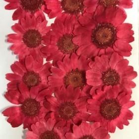 押し花素材パック ノースポール(赤)14個入りNo1057