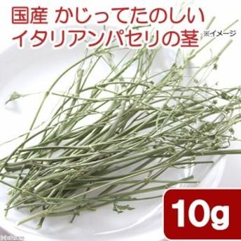国産 かじってたのしい イタリアンパセリの茎 10g 小動物用のおやつ 無添加 無着色 (ハムスター 餌)