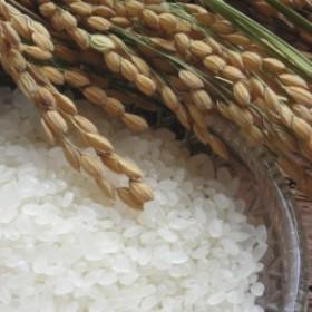 日本のお米セット 魚沼産こしひかり 2kg KM15002401