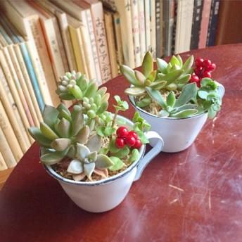 エナメルカップのもりもり多肉植物寄せ植え