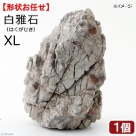 形状お任せ 白雅石 XL 1個 沖縄別途送料