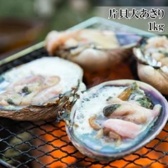 【片貝大あさり 1kg】 活ものの大あさり(ウチムラサキ貝)を使用し、鮮度の良いままに生冷凍【冷凍】