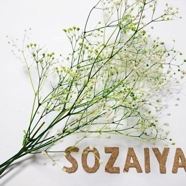 かすみ草 つぼみ 2g ホワイト×グリーン プリザーブドフラワー