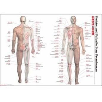 解剖ポスター 全身骨格と骨指標(支社倉庫発送品)