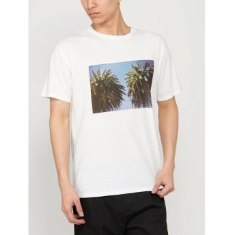 【53%OFF】 コトリカ パームツリープリントTシャツ メンズ オフホワイト M 【COTORICA.】 【セール開催中】