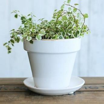 難あり 陶器鉢 植木鉢 ステップポット 白 ゴールドライン 受け皿付き XY2451 L