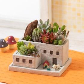 寄せ植え「ポチといっしょの楽しいお家」