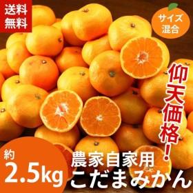 みかん 送料無料 農家自家用こだまみかん約2.5kg ミカン 蜜柑(gn)