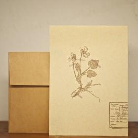 greeting card2枚セット 【アンティーク押し花スミレ 105×149mm】