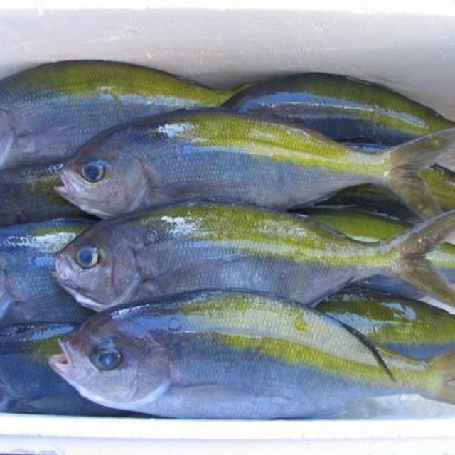 室戸産 新鮮地魚3種お造りセット(セット)