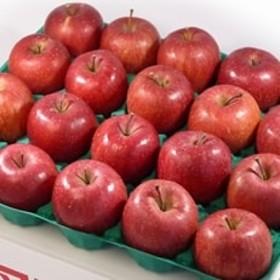 【青森県産南部地方りんご】サンふじ 中玉5kg