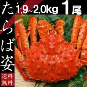 タラバガニ 姿 たらば蟹 脚 足 ボイル 1.9kg~2kg 1尾 冷凍 北海道加工 送料無料 かに ギフト プレゼント お買い得