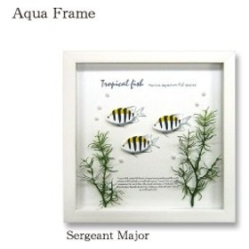Aqua Frame Sergeant Major おしゃれ かわいい 熱帯魚 壁掛け 天然木 壁面