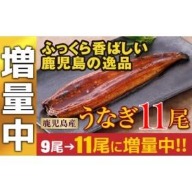 鹿児島産特上うなぎ11尾!