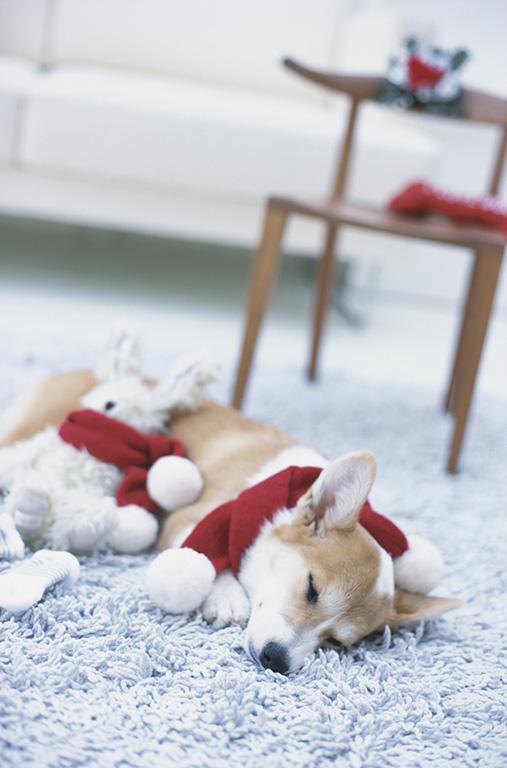 カーペットで寝ている犬