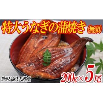 鹿児島県産特大うなぎの蒲焼き(無頭)200g×5尾