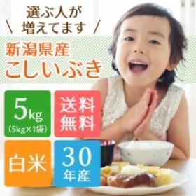 【喜ぶ子供が増えてます】新潟県産 こしいぶき 5kg (5キロ×1袋) 【送料無料 ※沖縄へは別途送料】  米 5キロ 送料無料 お米 5kg 安い