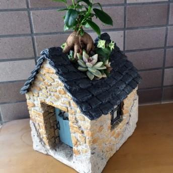 アンティークハウスのガジュマルと多肉植物寄せ植え