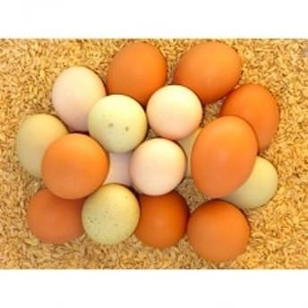 ホシノのおいしい卵詰め合わせ 5種20個セット
