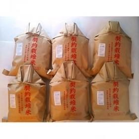 【平成30年産】もっちり米 30kg(5kg×6袋)/(精米)