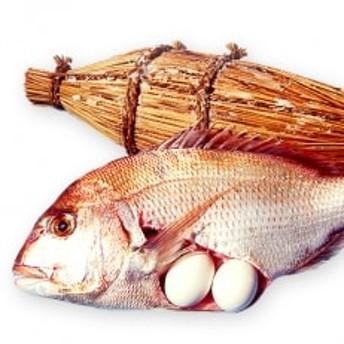 瀬戸内海産 天然鯛の浜焼き4~6人前