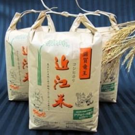 平成30年産 近江米コシヒカリ30kg(白米10kg×3袋)