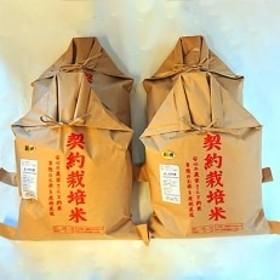 【平成30年産】もっちり米 20kg(5kg×4袋)/(精米)